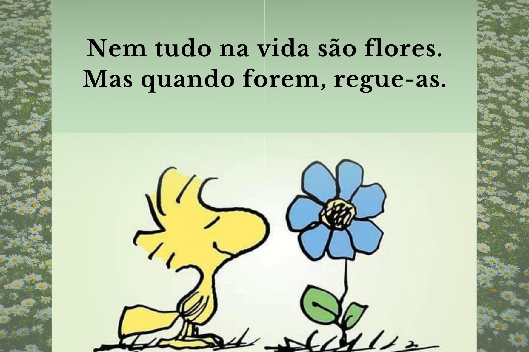 texto: Flores e Espinhos